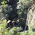 Monteverde Waterfall