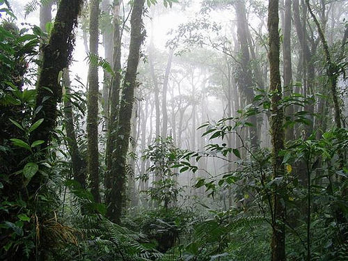 Risultati immagini per costa rica monteverde cloud forest