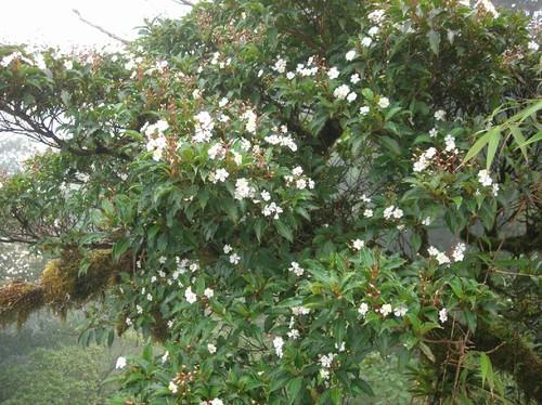 Santa Elena Reserve in Monteverde, Costa Rica